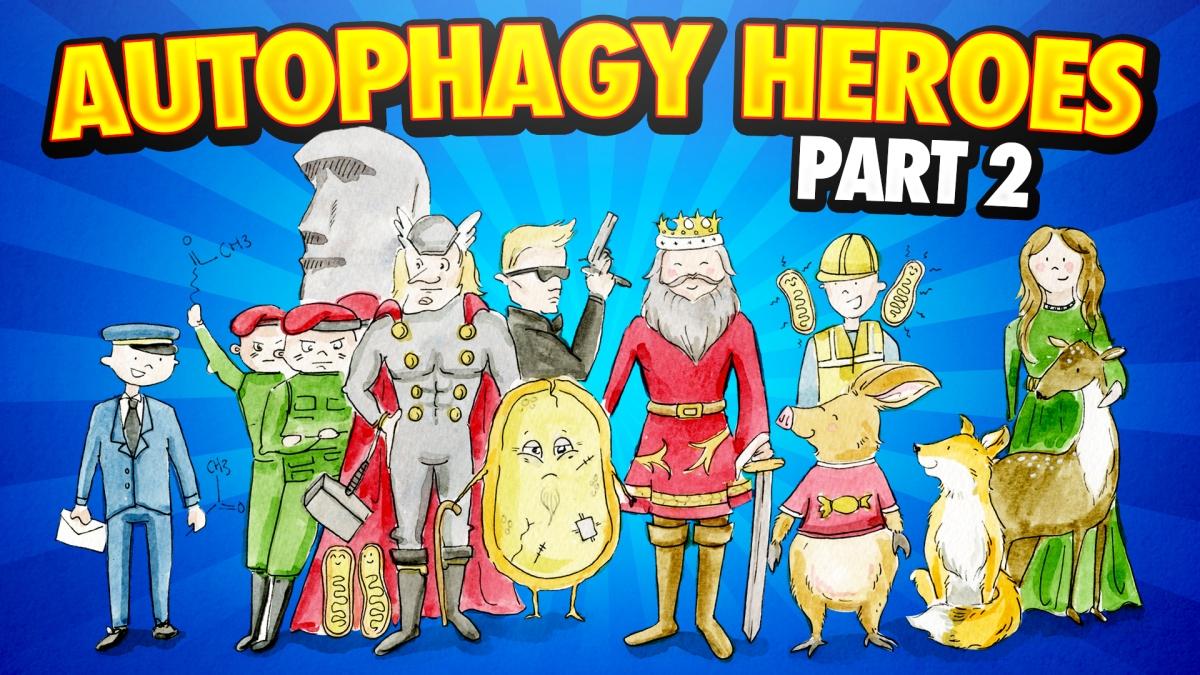 AUTOPHAGY-HEROES-2
